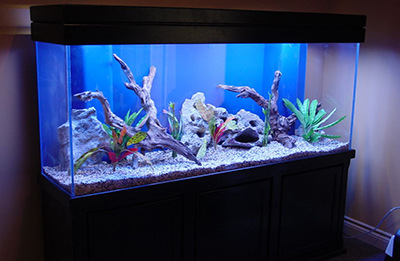 fish tanks1